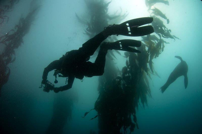 Diver Kelp